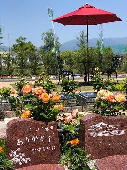 圓成寺 琵琶湖・堅田ふれあいパーク_2