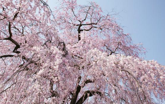 京都天が瀬メモリアル公園_2