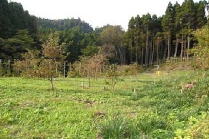 樹木葬の天徳寺_0