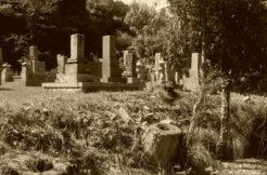 土葬された遺体を改葬できるでしょうか?