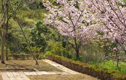市原南霊園個別型樹木葬(暁・あかつき) 1名