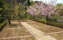 市原南霊園個別型樹木葬 (絆・きずな)