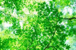 樹木葬の種類とメリット・デメリット!おすすめのタイプは?