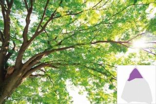 みかもメモリアルパーク自然葬 天空樹木葬