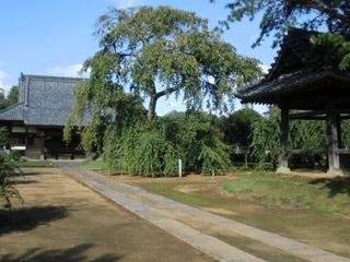 西林寺墓苑_0