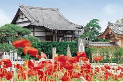 正円寺の画像1