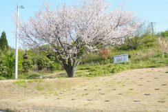 出雲霊苑樹木葬の画像1