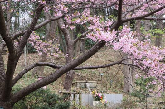 桜葬-木もれ陽2