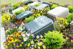 さがみ野霊園樹木葬の画像3