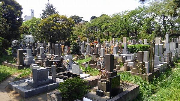 都立 青山霊園の画像