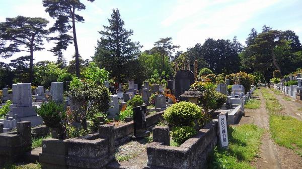 都立多磨霊園の画像2