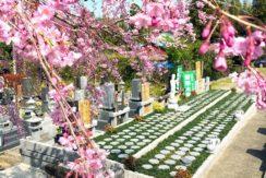 市原さくら樹木葬墓地の画像1