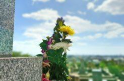 お墓がない場合、遺骨はどうする?墓なしの供養を解説