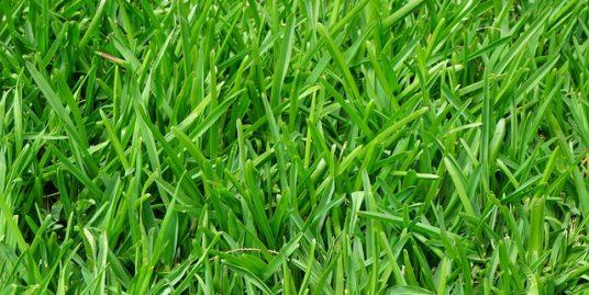 お墓の雑草対策の画像1