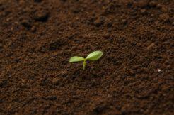 遺骨を土に還す方法を紹介!タイミングや土に還る年数
