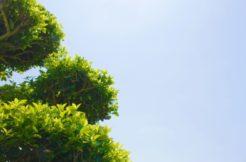 お墓に植える木は何がいい?植木の選び方とお手入れの方法