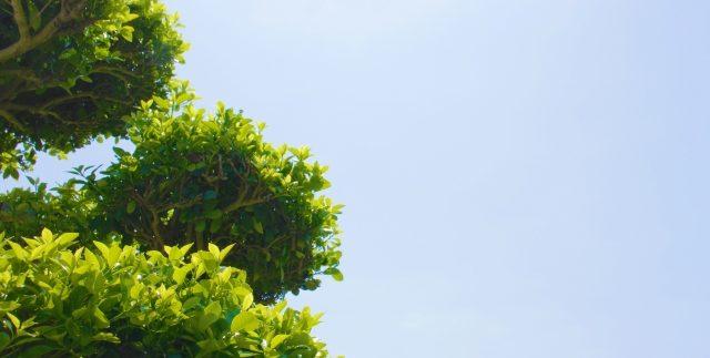 お墓の植木イメージ1