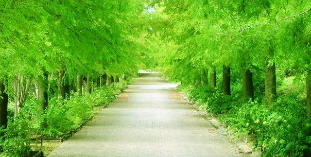樹木葬の流れイメージ1