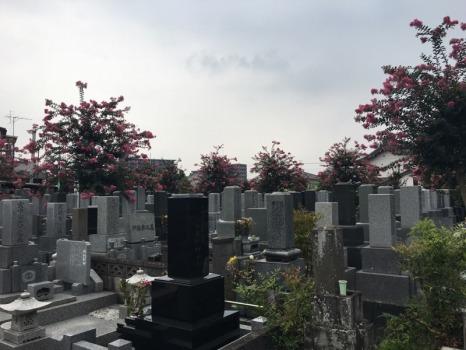 浄光寺墓地_4