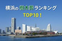横浜市の樹木葬人気ランキングTOP10!お墓の費用・資料請求