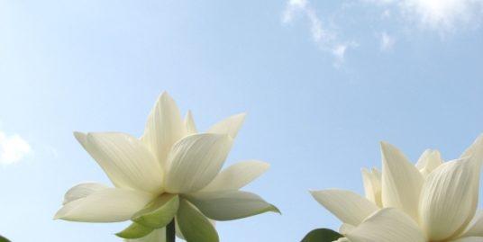 仏教のイメージ1