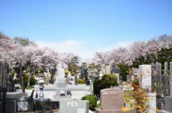 墓地の種類を解説!寺院墓地・民営霊園・公営霊園の違いと特徴