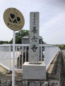 平和公園 養念寺_4