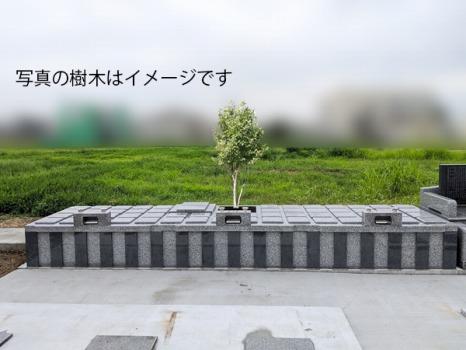 桜山樹木葬_1