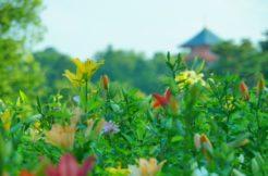 埼玉県所沢市の墓地・霊園人気ランキングTOP15!お墓の費用・資料請求