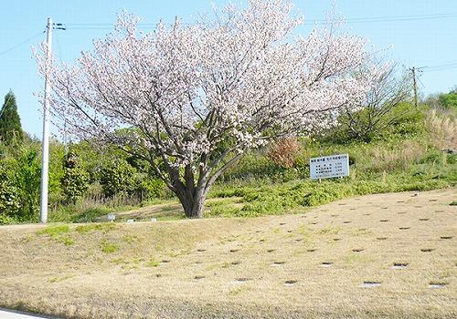 出雲霊苑樹木葬3