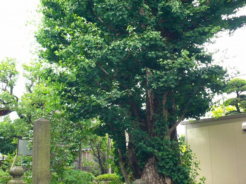 古川浄苑ガーデンレポ2
